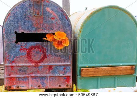 California poppy flower grunge mailboxes along Pacific Highway Route 1 US 101 USA
