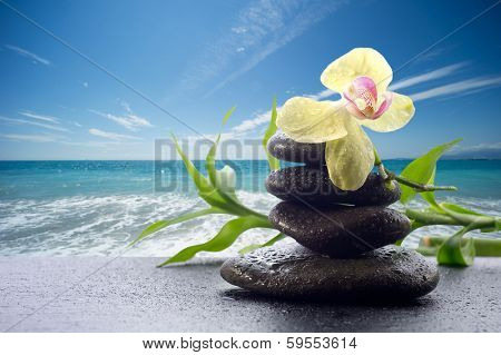 orchid with stone  against blue sky - spa concept