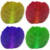 Four Leaves With Veins In Fluorescent Colors