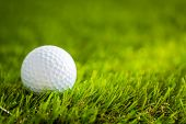 image of caddy  - Golf ball on green grass - JPG
