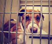 stock photo of runaway  - a stray dog at the pound or shelter done with a retro vintage instagram filter - JPG