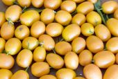 picture of tangelo  - kumquat