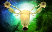 pic of fimbriae  - Digital illustration of female reproductive system in colour background - JPG