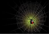 foto of spider web  - Halloween spider web background - JPG