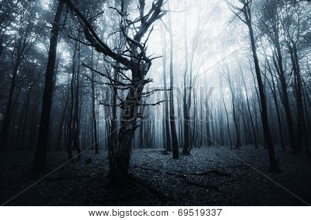 Halloween forest with dark fog and trees
