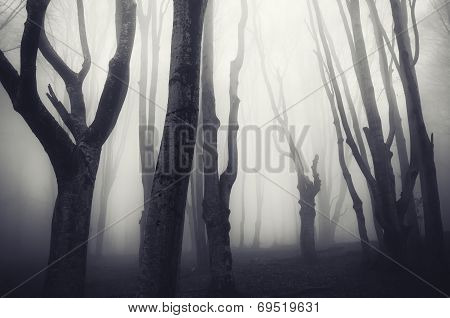 Dark Halloween forest with mysterious fog