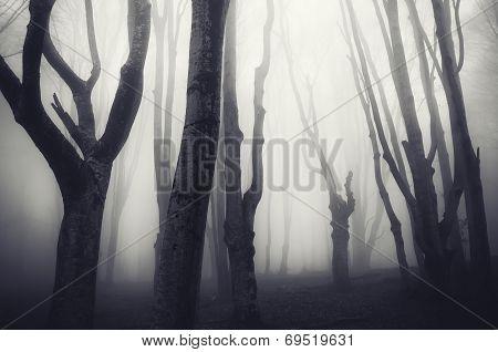 Dark Halloween forest with mysterious fog