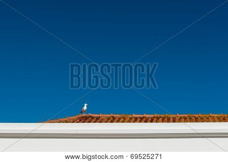 Seagull On A Red Roof, Nazare (portugal)