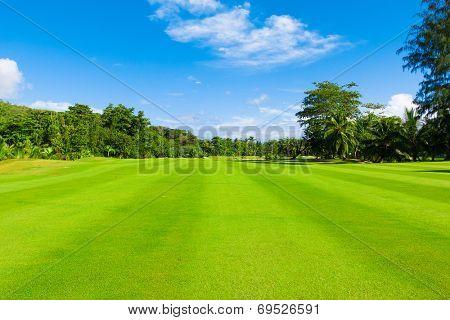 Green Fairway Grass