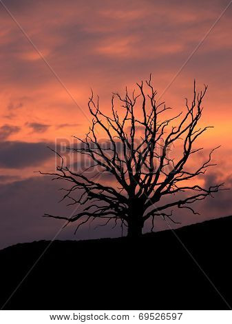 Bare Leaved Tree Skeleton With Dramatic Cloudy Sky