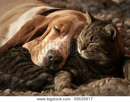 Cat pillow dog blanket
