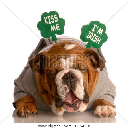 Kiss Me Im Irish Bulldog