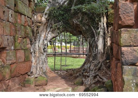 Tunnel formed by tree and two stone walls