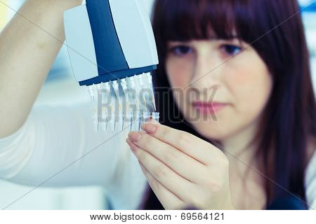 medical or scientific researcher or doctor working with a pipette, biological samples and a well tray in a laboratory