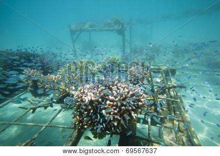 Coral Regeneration