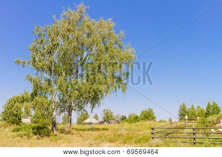 rural landscape with birch trees, country side russia