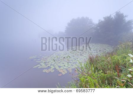 Dense Mist Over Wild Lake