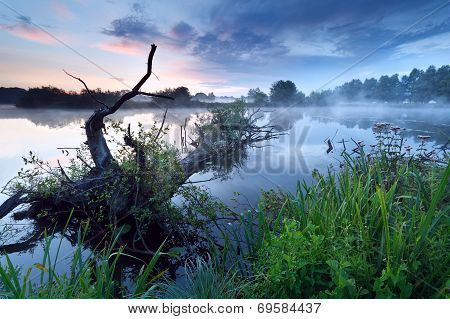 Misty Sunrise On River With Old Tree In Water