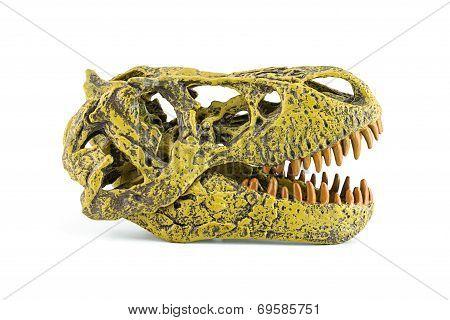 Tyrannosaurus Fossil Head