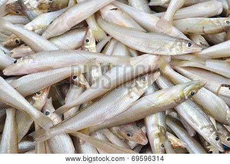 Smelts Fish