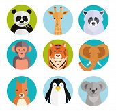 stock photo of koalas  - Cute vector cartoon animals in colored round badges with a panda  giraffe  raccoon  monkey  tiger  elephant  squirrel  penguin and koala - JPG