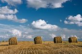 stock photo of hay bale  - Round hay bales on the harvested field - JPG