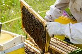 stock photo of beehive  - Beekeeper working with beehives in Alpine meadow.
