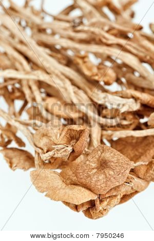 Dried Armillaria (fairy-ring ) Mushrooms Isolated On White