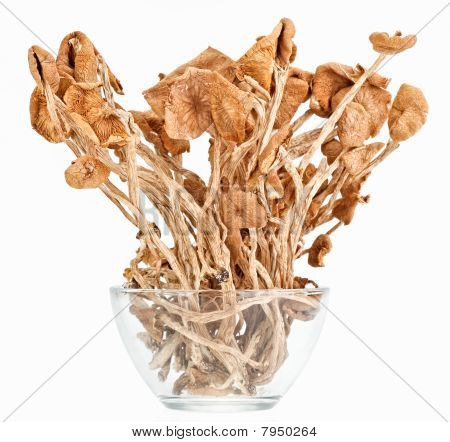 Dried Armillaria (fairy-ring ) Mushrooms In A Glass Bowl