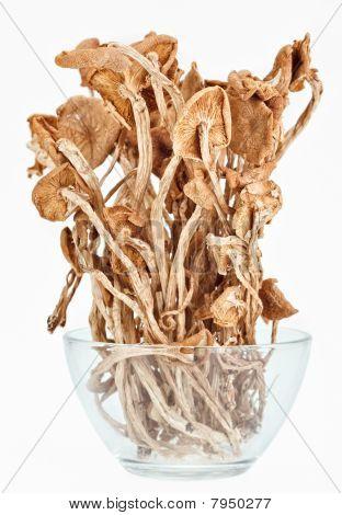 Dried Armillaria (fairy-ring ) Mushrooms In A Glass Bowl