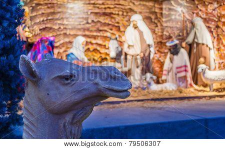 Camel In Front Of Nativity Scene