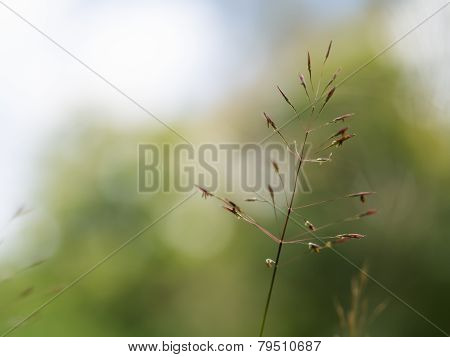 Grass Seed Stalks Field