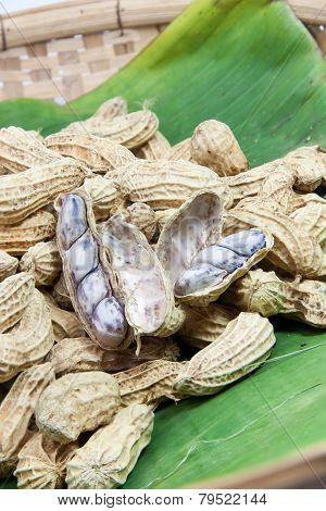 Peanut Boiled On Banana Leaf 03