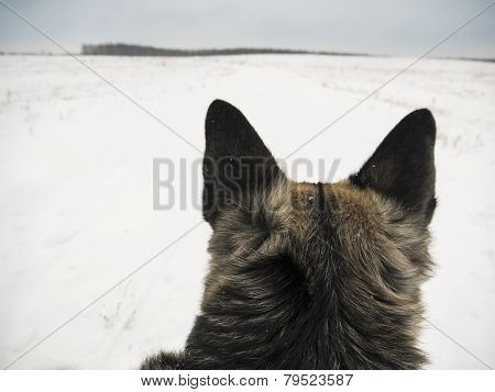 Dog Watching