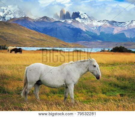 White  horse grazing in a meadow near the lake. On the horizon, towering cliffs Torres del Paine
