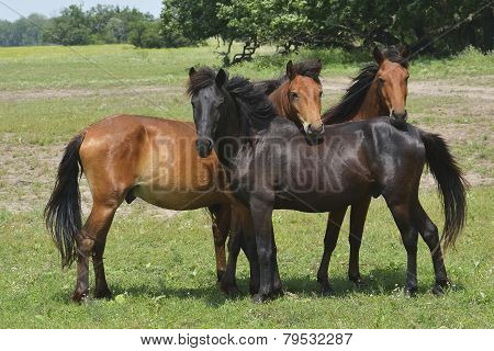 Horses On Field In Summer