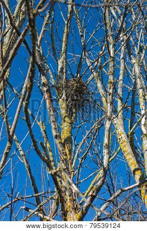 Empty magpie Nest