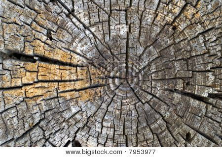 Old Tree Rings
