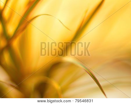 Beautiful bokeh flower. Beautiful Bokeh Lights Abstract Background.
