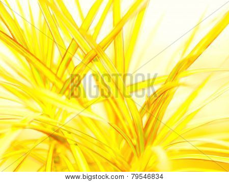 Beautiful bokeh flower. Beautiful Bokeh Lights Abstract Background.