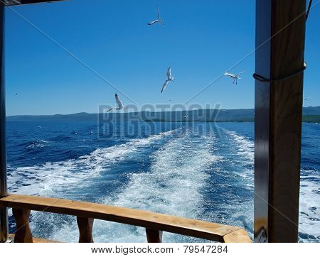 Boat And Seagulls