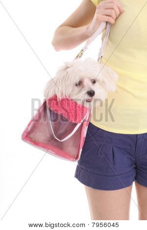 mom carrying pooch in purse