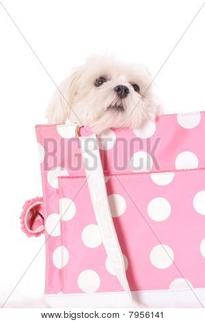 pooch peeking over bag