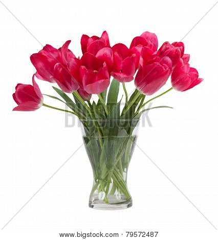 Bouquet Of Tulips In Glass Vase Isolated On White Background