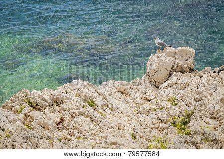 Seagull on coastal rocks.