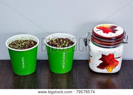 Home Herbs Seedlings