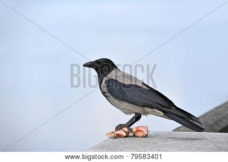 Raven with meat