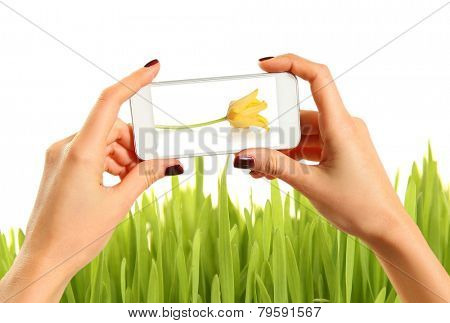 Hands taking picture of green grass