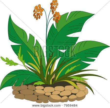 Bed With A Tropical Plant With Orange Berries