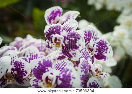 Orchids in arboretum Volcji potok, Kamnik, Slovenia